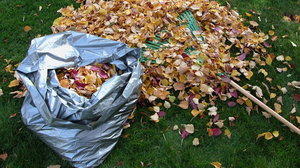 Raking and bagging leaves (Thinkstock/PA)
