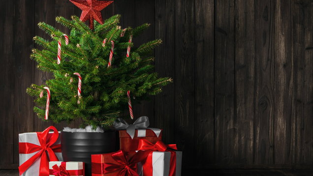 Small Christmas tree. (Thinkstock/PA)