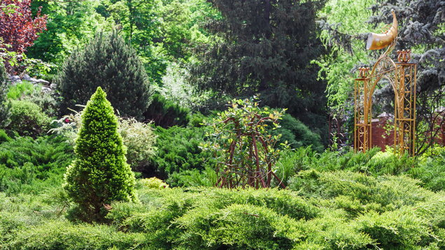 Landscaping with conifers. (Thinkstock/PA)