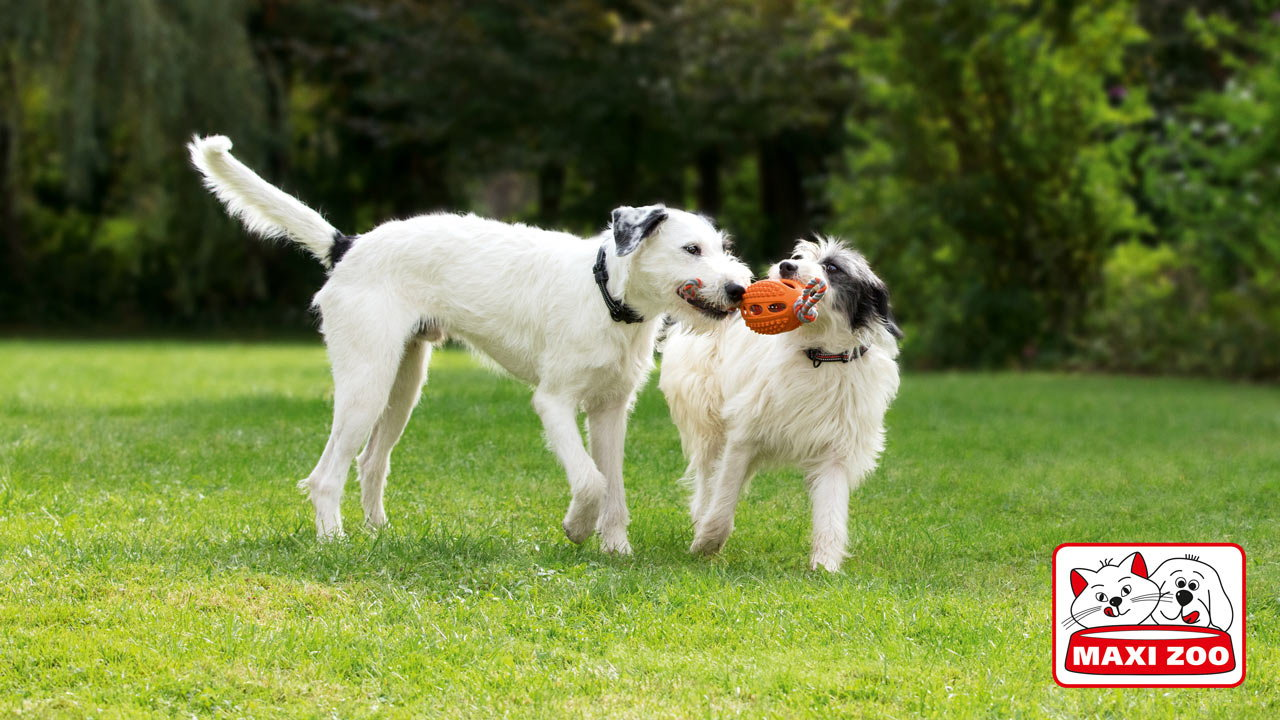 3 Ways For You and Your Dog To Keep Fit