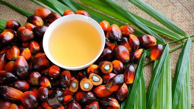 Supermarket Giant Iceland Bans Palm Oil From Own-Brand Products
