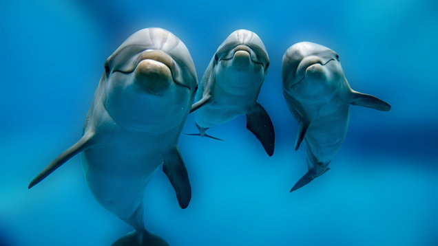 All you need to know about the world's first dolphin sanctuary and why it's so important