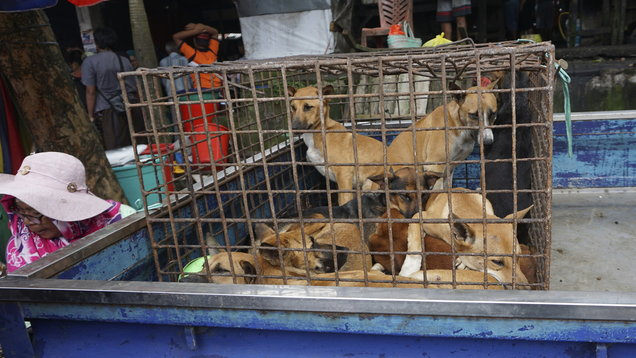 Dogs for sale in a cage on the back of a truck at a market in Air Madidi, North Sulawesi, Indonesia (Dog Meat Free Indonesia via AP)