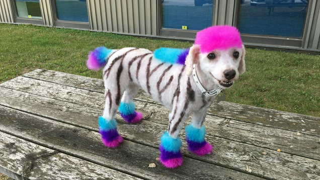 PA Real Life - Nicole Rose - dyed dogs