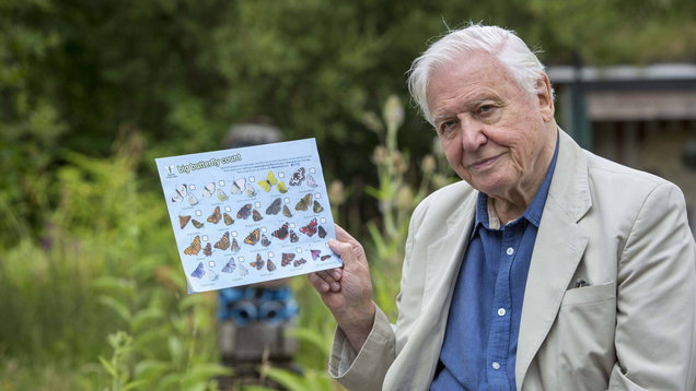 Sir David Attenborough launching a Big Butterfly Count (Butterfly Conservation)