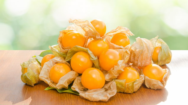Fresh pichuberry (Cape Gooseberry), very delicious and healthy berry fruit, uchuva on brown wooden table with natural light green bokeh background
