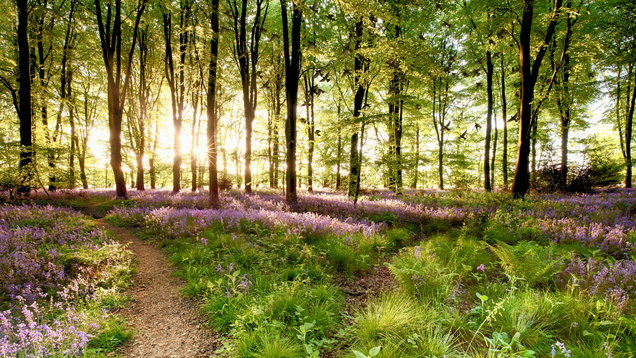 International Day of Forests: The best woodland walks to while away your weekend