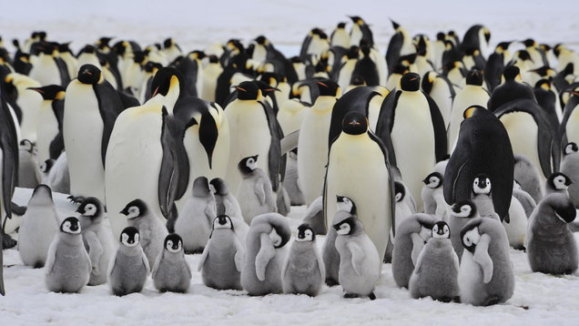 World Penguin Day: Test your knowledge with our penguin-themed quiz