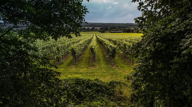 British Vineyards Surrey – Kent