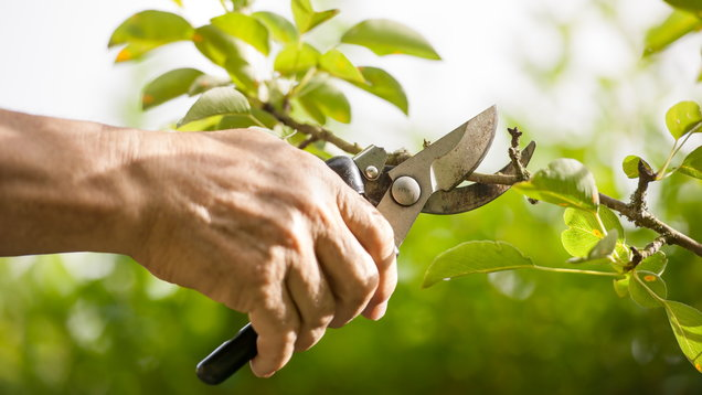 Hand pruning tree with pair of secateurs