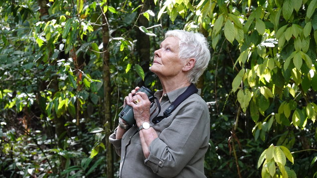 Judi Dench is bowled over by Borneo – here's why…