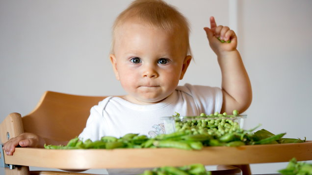 Toddler boy in white shirt, eating pea at home