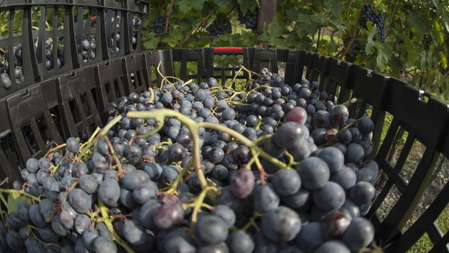 Grape expectations: 7 top drops for International Grenache Day